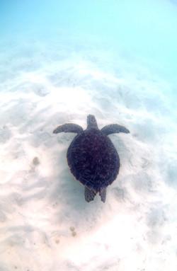 Turtles006.jpeg
