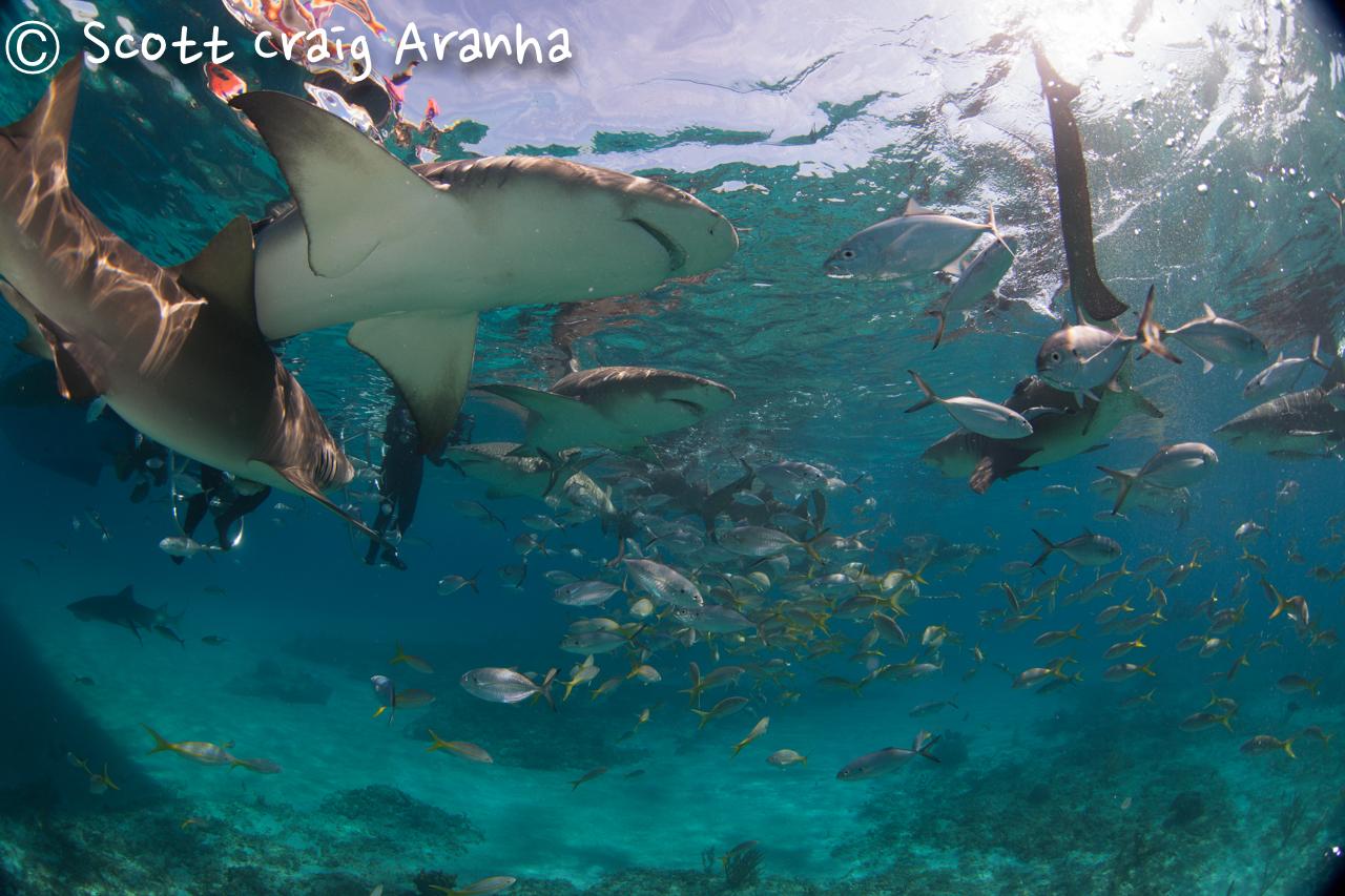 Shark054.JPG