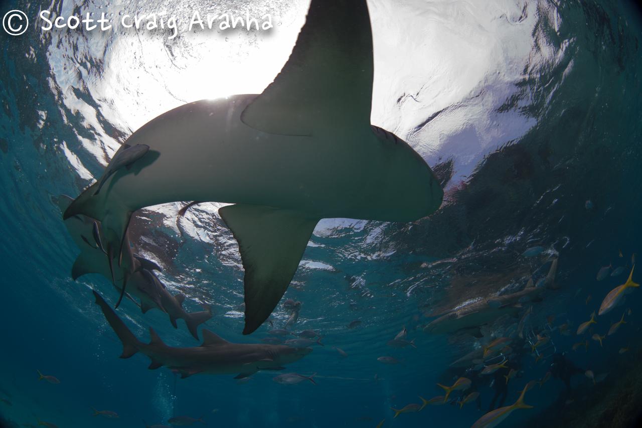 Shark018.JPG