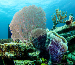 Wreck and Reef017.JPG