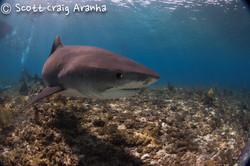 Shark046.JPG