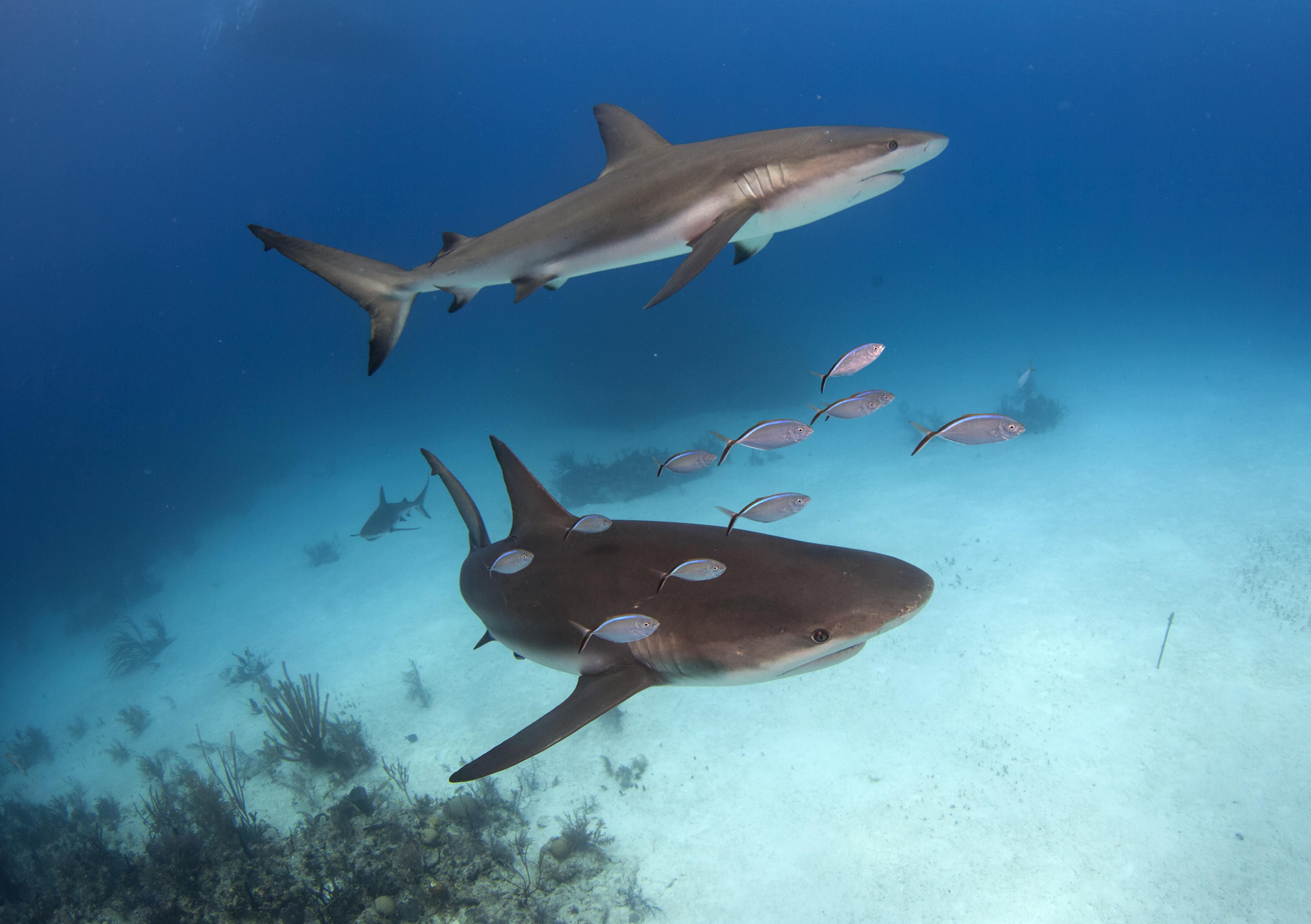 Shark078.JPG