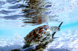 Turtles015.jpeg