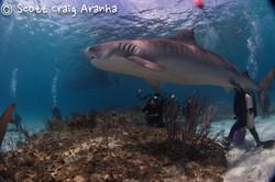 Shark021.JPG