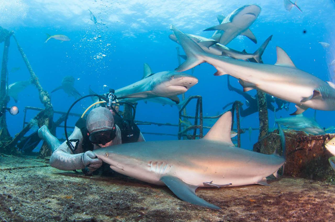 Shark064.JPG