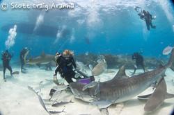 Shark034.JPG