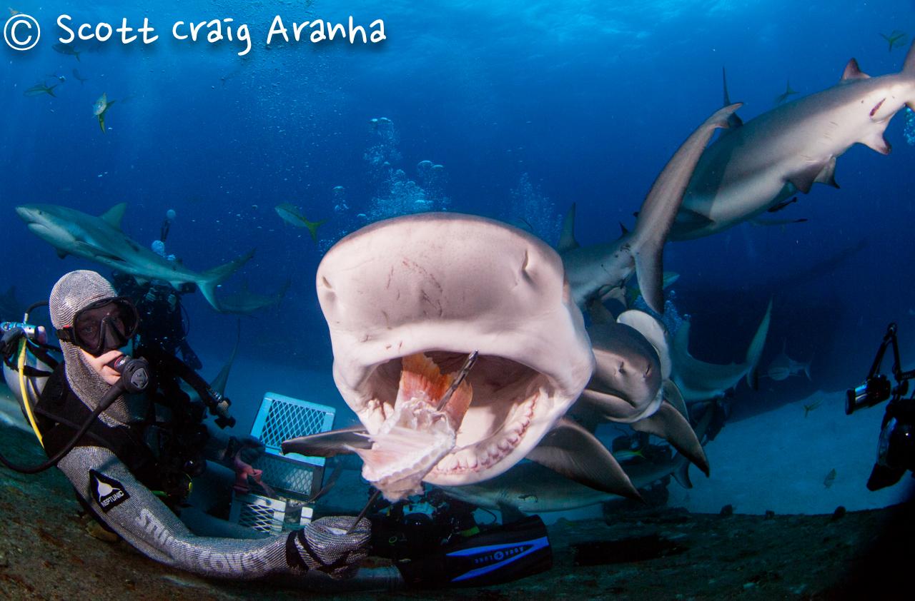 Shark091.JPG
