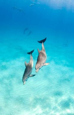 Dolphin004.jpeg