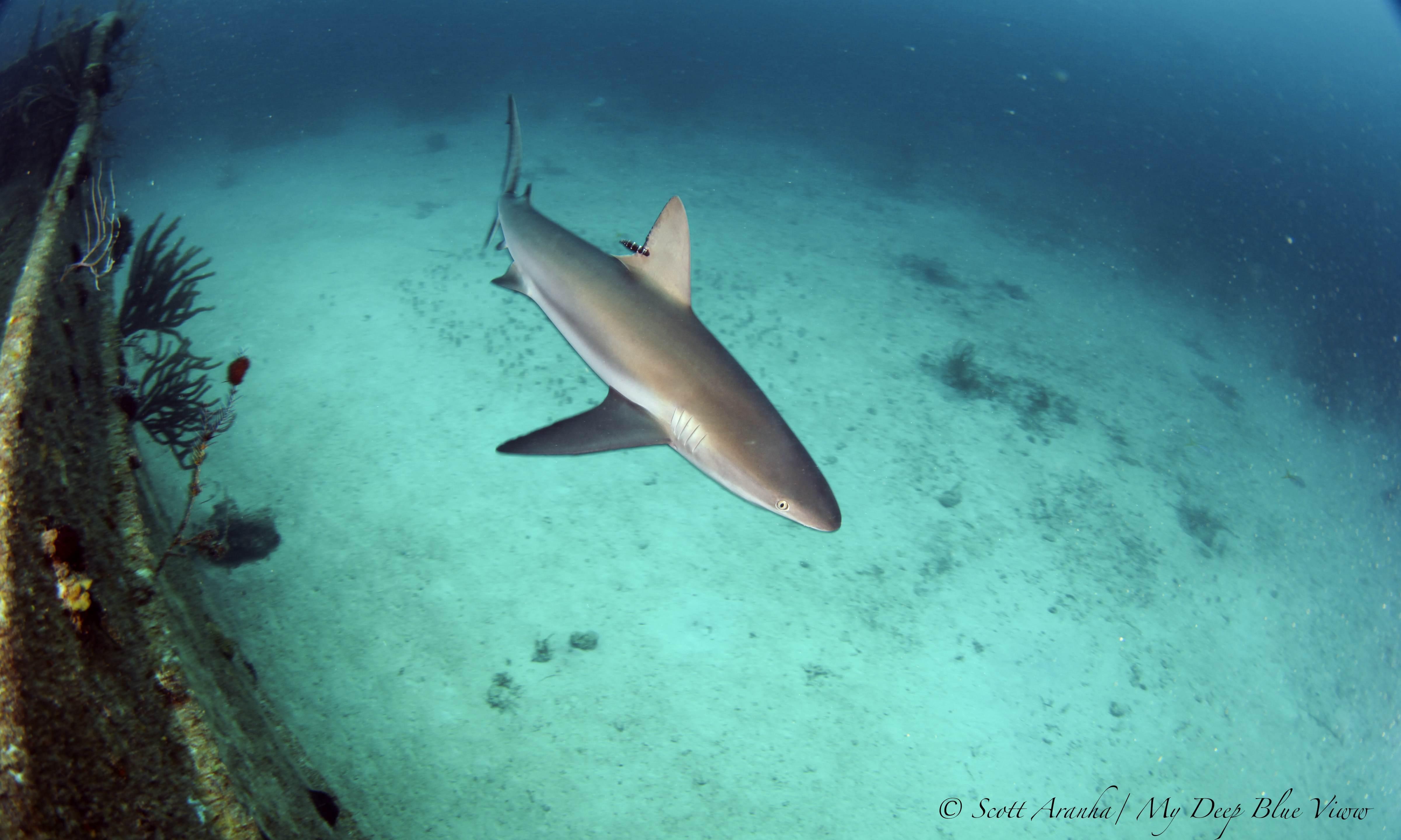 Shark096.JPG