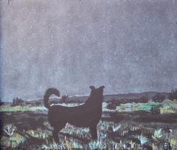 Black Dog By MoonLight II (2014)