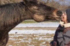 Osteopathie, Physiotherapie und Akupunktur für Pferde Antonia Siep