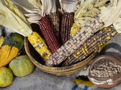 SHARE FARM