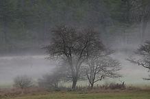 2015 trees 2.jpg