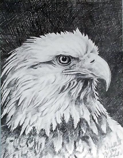 Eagle  Albert White