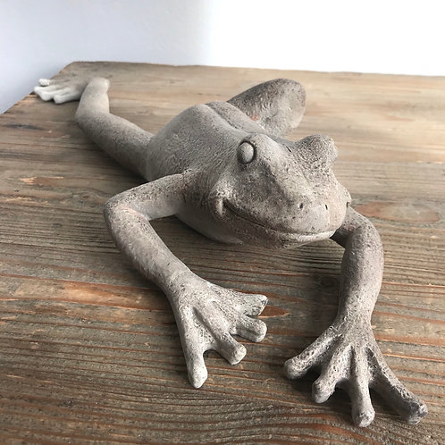 Climbing Wall Frog Close-Up
