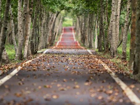 The road less trodden
