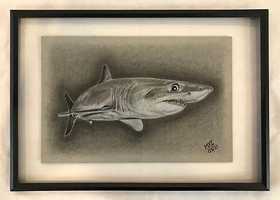 MI shark.jpg