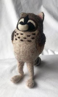 shima racoon owl.jpg