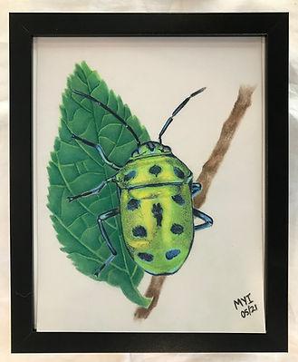 MI beetle.jpg