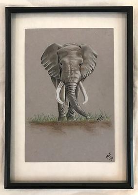 MI elephant.jpg