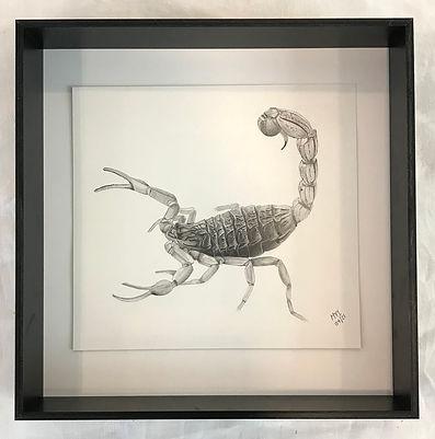 MI scorpion.jpg