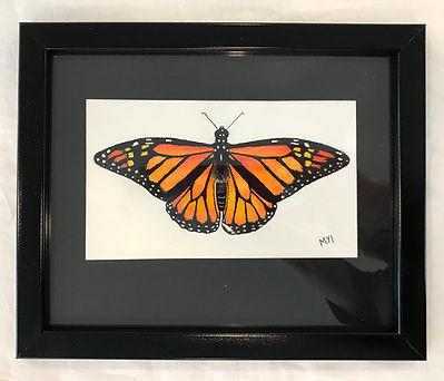 MI butterfly.jpg