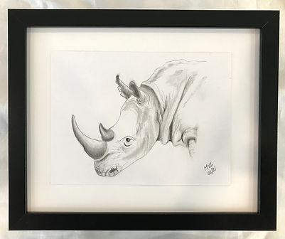 MI rhino.jpg