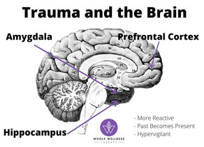 How Does Trauma Affect the Brain? - And what it means for you