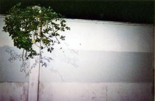 DZ3.jpg