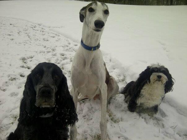 Liam, Quinn & Spencer