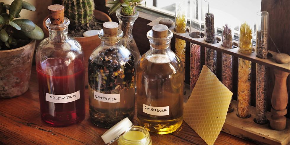 Découverte des plantes médicinales et confection de baumes naturels