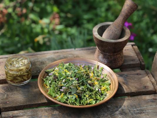 Les salades sauvages printanières
