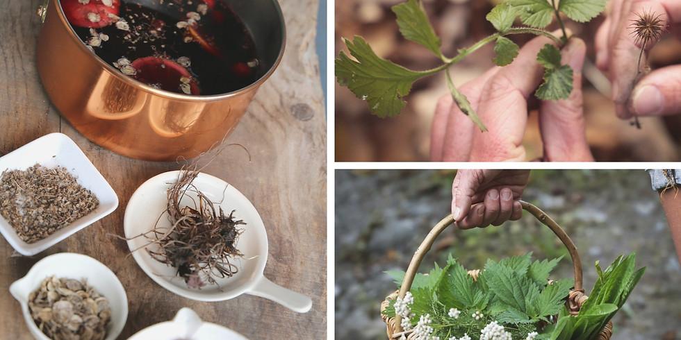 Atelier plantes comestibles - Cueillette & apéro sauvage