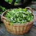 L'aspérule odorante - Recette de l'apéritif, vin de Mai, Maitrank.