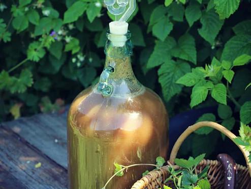 Bière au lierre terrestre - Glechoma hederacea