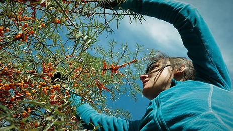 Charlotte Passelègue - Hautes Herbes