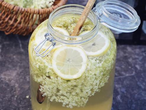 SUREAU NOIR - Sambucus nigra - Recette de la limonade