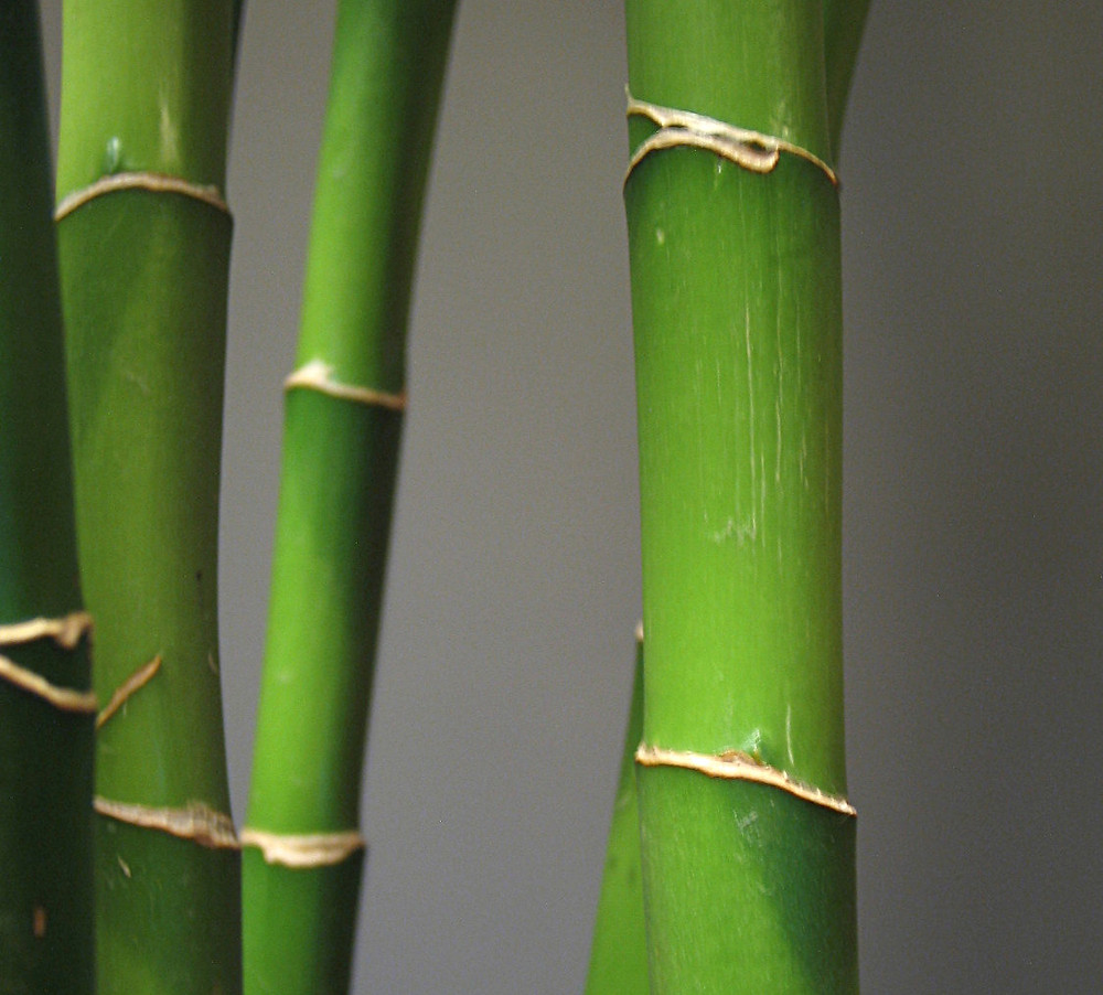 Bamboo as a sustainable material source