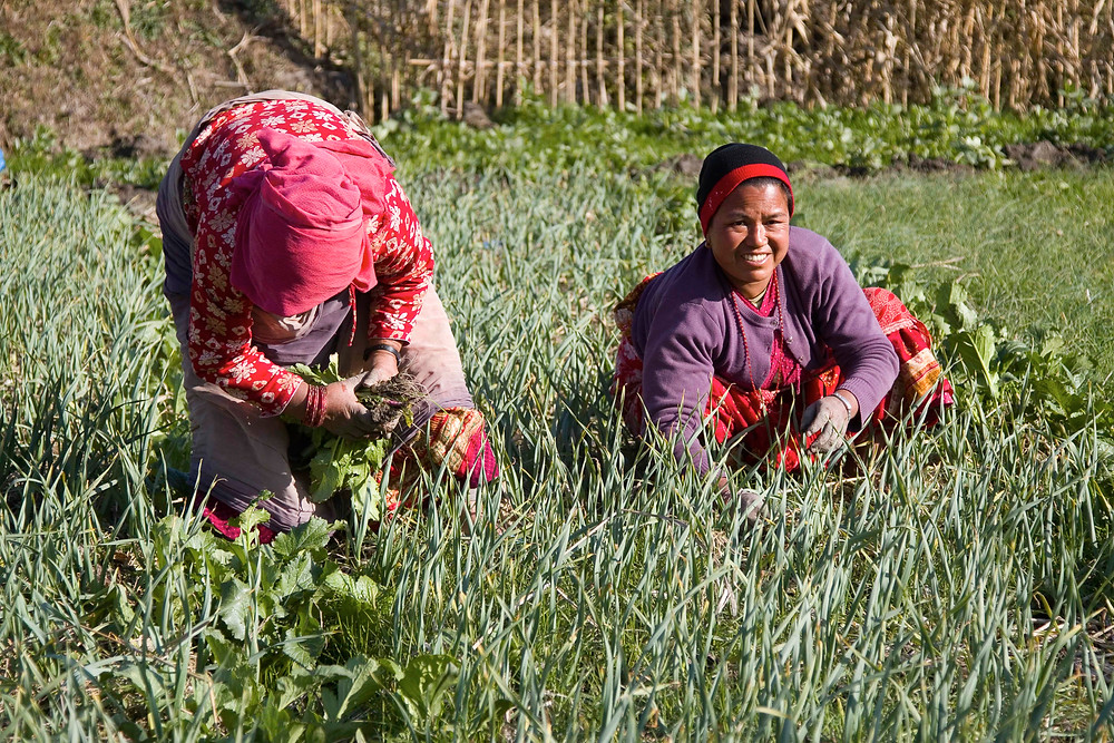 Subsistence farming as a means of employment in Nepal