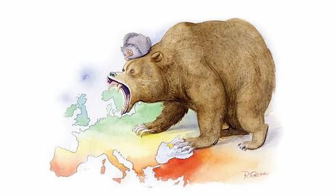 bear.jpg.webp
