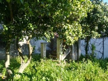 Example of the lush garden