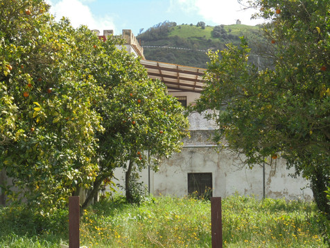 View of the Orchards