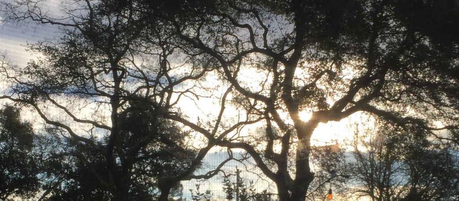 Gifts of Trees (by Maureen Kellen-Taylor, PhD)