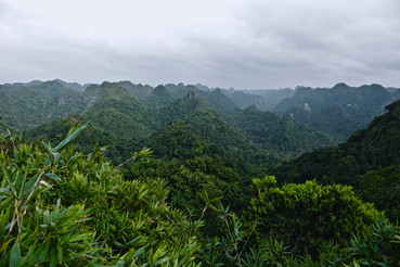 Cat Ba island off the east coast of Vietnam holds the last remaining habitat for the critically endangered White-headed Langur. The species has declined by 80% over the last three generations but due to new protection laws there is hope. As it stands, there are less than 70 individuals left in the wild. Somewhere in this tangled forest, we were hoping to spot them.  Photo credit: Jonathan Poole