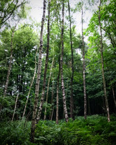 Beautiful Oxfordshire woodland.