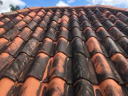 Dirty Barrel Tile Roof