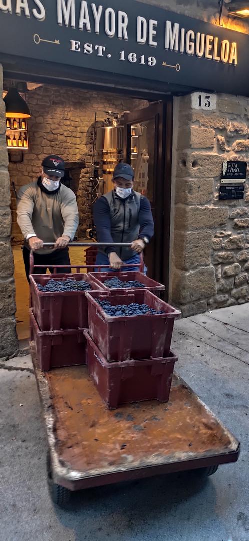 Entrada de la uva en bodegas