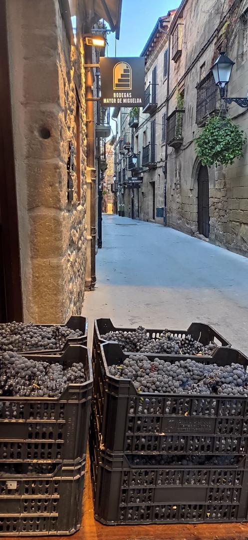 Entrada de la uva en bodega
