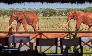 ngutuni-safari-lodge.jpg