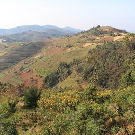 Collines-cultivées-Rwanda.jpg